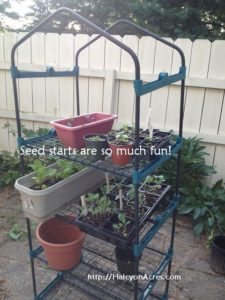 Seed starts are coming along at http://HalcyonAcres.com