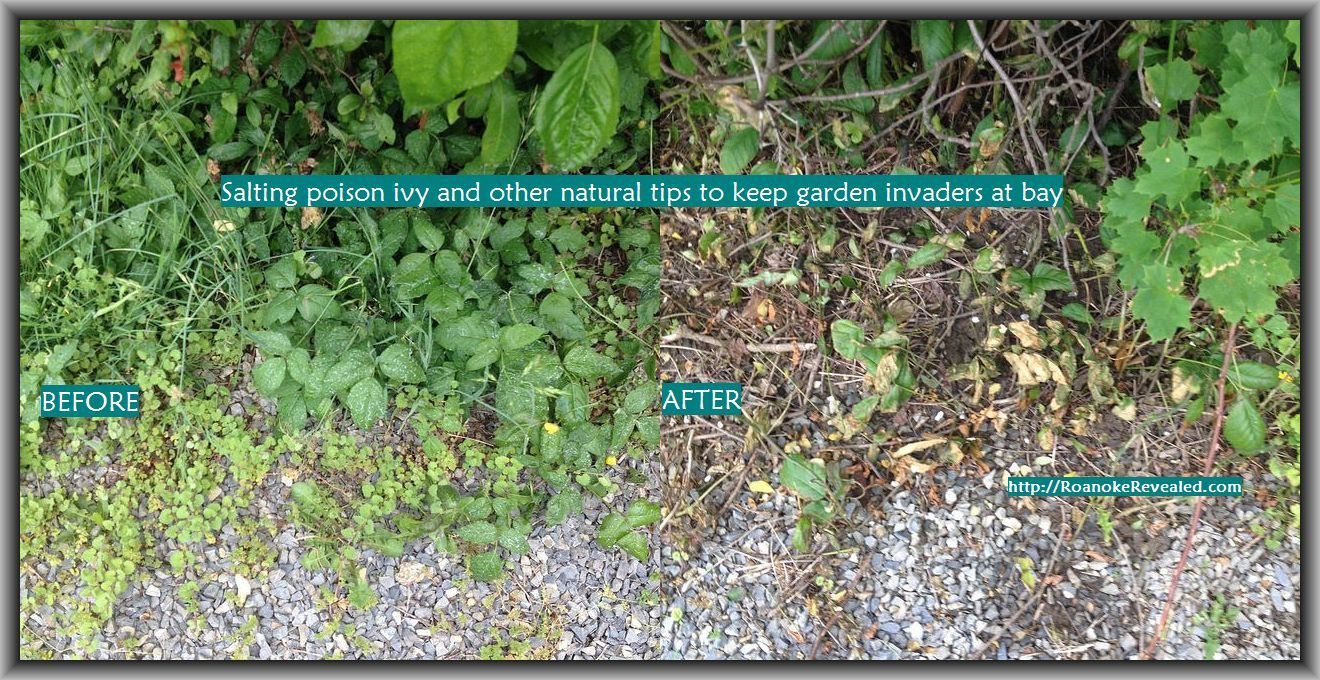 Rid your garden of unwanted invaders naturally with simple DIY ideas at http://RoanokeRevealed.com