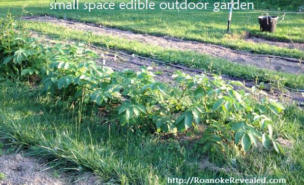 5 easy tips for planning edible gardens in small outdoor spaces