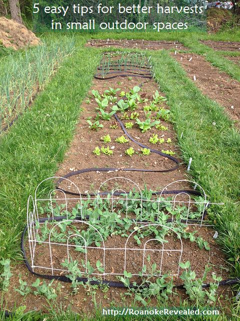 Chemical-free vegetable and herb gardening in small spaces tips at http://RoanokeRevealed.com