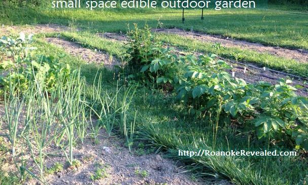 5 easy tips for better yields from edible gardens in small outdoor spaces