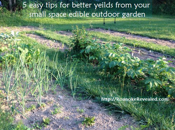 Find easy tips for better small space vegetable gardening yield at http://RoanokeRevealed.com