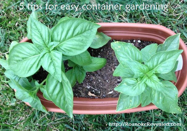 Find easy container gardening tips at http://RoanokeRevealed.com