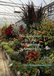 Incredible greenhouses and more in Roanoke Virginia detailed at http://RoanokeRevealed.com