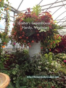 http://RoanokeRevealed.com can help you find great llocally owned greenhouses and other local treasures.