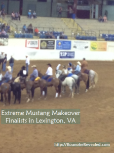 Extreme Mustang Makeover finalists at Lexington, VA 2016 event